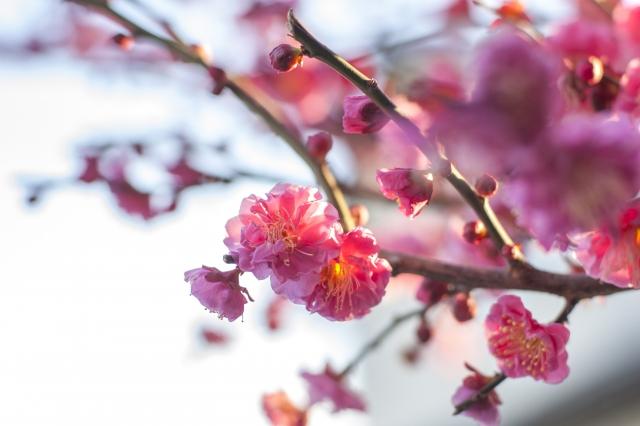 立春とは?2022年の立春はいつ?立春におすすめの食べ物とは