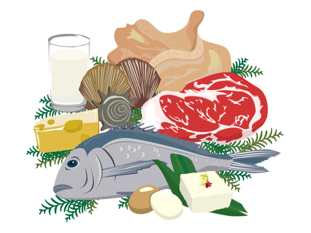 タンパク質の多い食品とは!タンパク質が不足するとどうなるの?